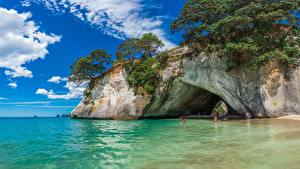 Image New Zealand Sea Crag Trees Cathedral Cove Nature