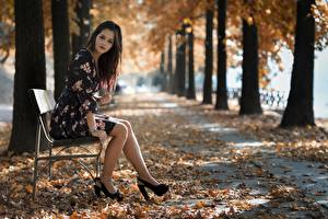 Photo Parks Autumn Bench Foliage Bokeh Brunette girl Sit Dress Legs High heels young woman