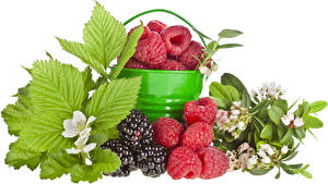 Pictures Raspberry Blackberry Berry Foliage White background Food