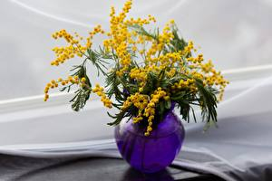 Image Acacia dealbata Blurred background Vase flower