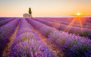 Bilder Sonnenaufgänge und Sonnenuntergänge Felder Lavendel Provence Frankreich Lichtstrahl Horizont Sonne
