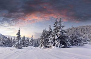 Wallpaper Sunrises and sunsets Forest Winter Snow Spruce Nature