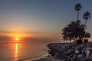 Photo USA Coast Sunrises and sunsets Stones California Trees Palms Cabrillo Beach in San Pedro Nature