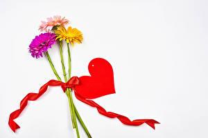 Fondos de escritorio Día de San Valentín Gerbera El fondo blanco Trio Corazón Cinta Tarjeta de felicitación de la plant flor