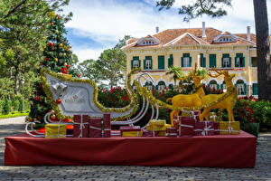 Images Vietnam Park New year Deer Christmas tree Sleigh Gifts Park Bao Dai King Palace in Da Lat Nature