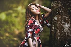 Pictures Asiatic Bokeh Posing Brown haired Frock Hands Trunk tree Girls