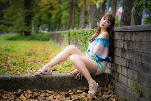 Pictures Asian Fence Foliage Brown haired Sitting Legs young woman