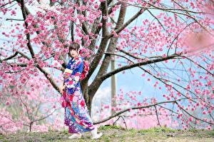 Image Asiatic Flowering trees Kimono Pose Staring Sakura female