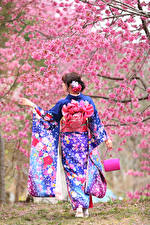 Pictures Asiatic Purse Flowering trees Back view Kimono Cherry blossom female