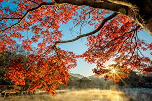 Pictures Autumn Pond Pagodas Branches Rays of light Fog Maple