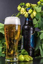 Desktop wallpapers Beer Hops Stemware Bottles Foam Food