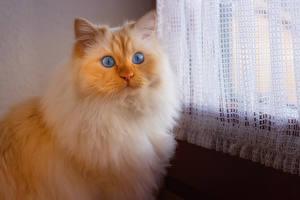 Desktop wallpapers Cats Snout Glance Animals