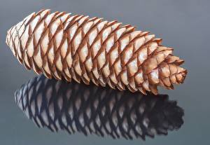 Images Closeup Pine cone Gray background Reflected Pine Cone Nature