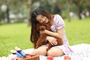 Fotos Hunde Asiatische Pudel Brünette Sitzend Umarmen Picknick Bokeh