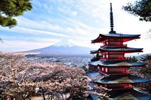 Wallpaper Flowering trees Temple Japan Mount Fuji Volcano Honshu Nature