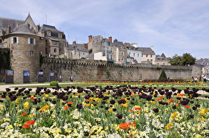 Wallpapers France Tulips Gardens Van, Brittany Cities pictures images