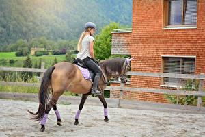 Bilder Pferd Blondine Helm Sitzend Schwanz junge frau