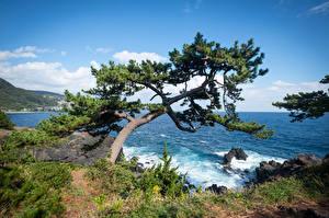 Bilder Japan Küste Bäume Felsen Ito, Jogasaki Coast