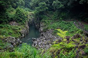 Fonds d'écran Japon Rivières Arbres Falaise Takachiho Gorge Nature images