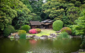 Wallpapers Japan Tokyo Parks Pond Trees Ueno Park Cities