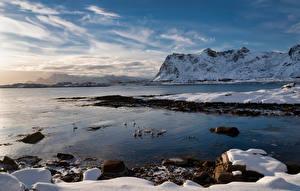 Desktop hintergrundbilder Norwegen Berg Lofoten Küste Gänse Schnee  Natur Tiere