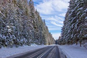 Bilder Polen Winter Wege Wälder Schnee Fichten