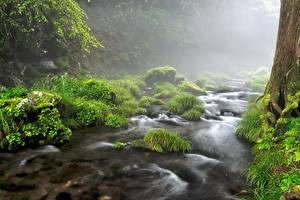 Image Stone Streams Moss Grass Fog