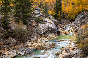 Pictures USA Forest Autumn River Stone Colorado, Twin Lakes Nature
