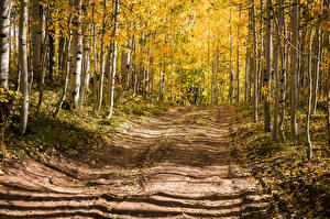 Image USA Forests Roads Autumn Trees Birch Aspen, Colorado Nature