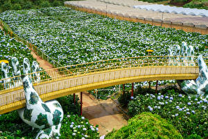 Images Vietnam Gardens Bridges Hydrangea Sculptures Hydrangea Garden in Da Lat Nature