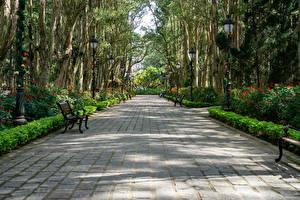 Fotos Vietnam Park Allee Bank (Möbel) Bäume Strauch Park Bao Dai King Palace in Da Lat Natur