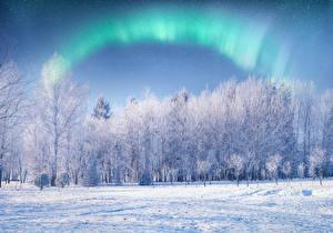 Photo Winter Snow Aurora Trees