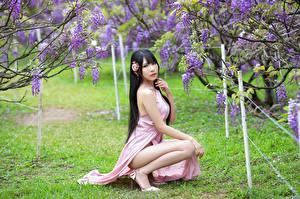 Hintergrundbilder Asiaten Blühende Bäume Brünette Sitzend Kleid Blick junge Frauen