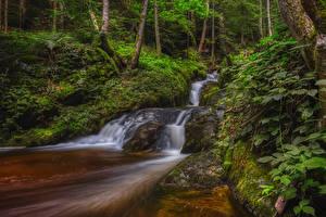Pictures Austria Forest Trees Moss Streams Ysperklamm