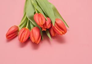 Photo Bouquet Tulip Pink background Red flower