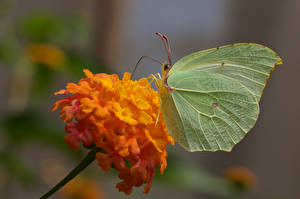 Wallpapers Butterfly Insects Bokeh animal