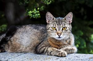 Wallpapers Cat Esting Paws Blurred background Animals