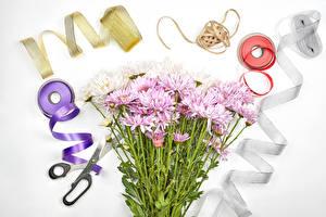 Hintergrundbilder Chrysanthemen Schere Grauer Hintergrund Band Blüte