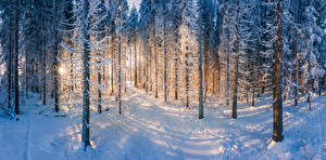 Image Finland Forests Winter Snow