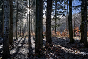 Photo Forest Trees Rays of light