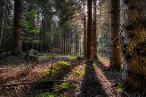 Images Germany Forests Trees Branches Shadow Hinterberg Nature