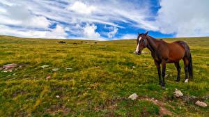 Desktop wallpapers Horses Sky Grasslands Clouds Grass animal