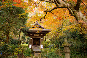 Pictures Japan Kyoto Park Autumn Pagodas Trees Nature