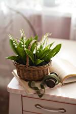 Bilder Maiglöckchen Weidenkorb Bücher Blüte