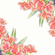 Fotos Gezeichnet Vorlage Grußkarte Weißer hintergrund Blüte