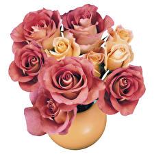 Fotos Rosen Blumensträuße Vase Weißer hintergrund Blumen