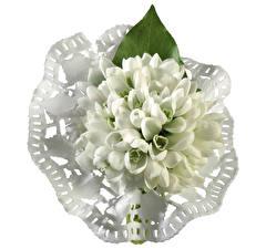 Desktop wallpapers Snowdrops Closeup White background flower
