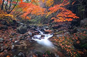 Pictures Stones Autumn Streams Leaf Moss