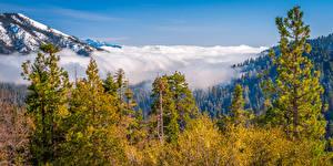 Bilder USA Park Berg Kalifornien Wolke Bäume Kings Canyon National Park