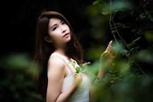 Bureaubladachtergronden Aziaten Bokeh Boomtakken Brunette meisje Kijkt Hand Jonge_vrouwen